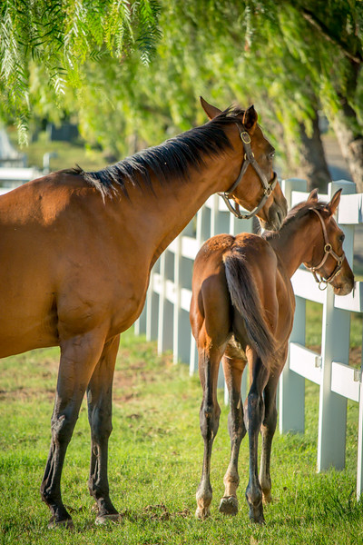 Special_T_Thoroughbreds13