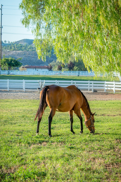 Special_T_Thoroughbreds7