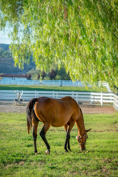 Special_T_Thoroughbreds9