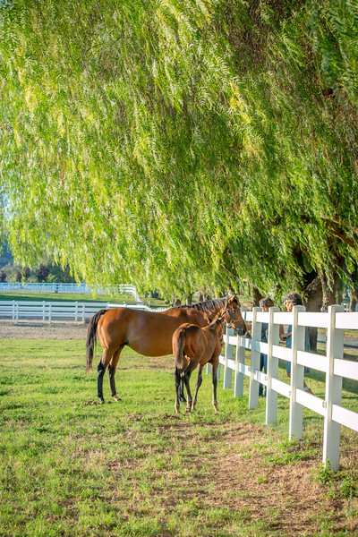 Special_T_Thoroughbreds12