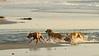 37644  Dog Beach, Del Mar