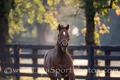 Awesome Patriot at Spendthrift Farm on 9.28.2013