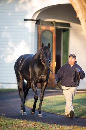 Shakin It Up at Spendthrift 11.26.14.
