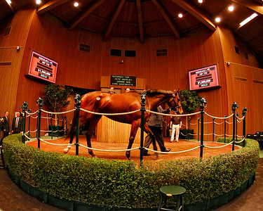 Hip 716, Moon Catcher, by Malibu Moon, sold at Keeneland for $1.35 million. 1.08.2008