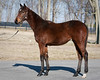 Spendthrift...Yearling & Foals '09 : Unlimited Image License Rights granted to Spendthrift Farm, Copyright retained by Matt Wooley and/or EquiSport Photos
