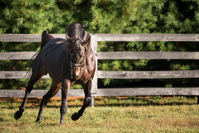Temple City at Spendthrift Farm on 9.28.2013