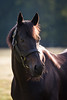 Spendthrift Farm : 20 galleries with 1060 photos