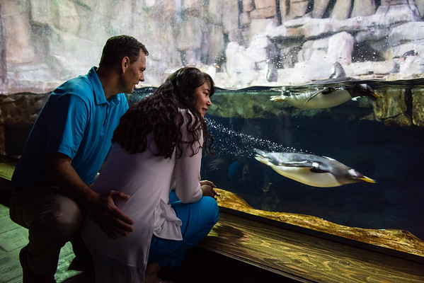 engagement_loveland_aquarium-819927