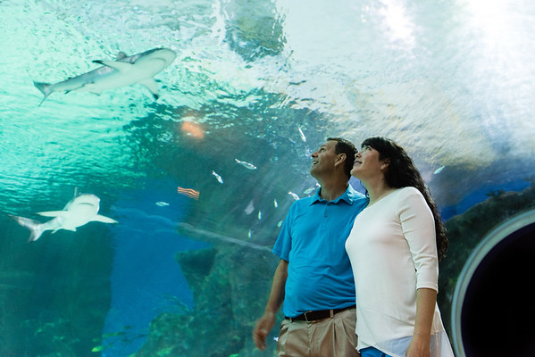 engagement_loveland_aquarium-810134