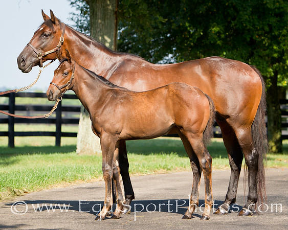 Glamourous Lady - Curlin '10