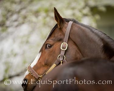 Rachel Alexandra at Stonestreet Farm 3.25.2011mw