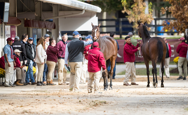 Taylor Made consignment at Fasig Tipton 11.04.18