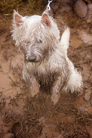 Dog Agility  Dog Agility Horse Show