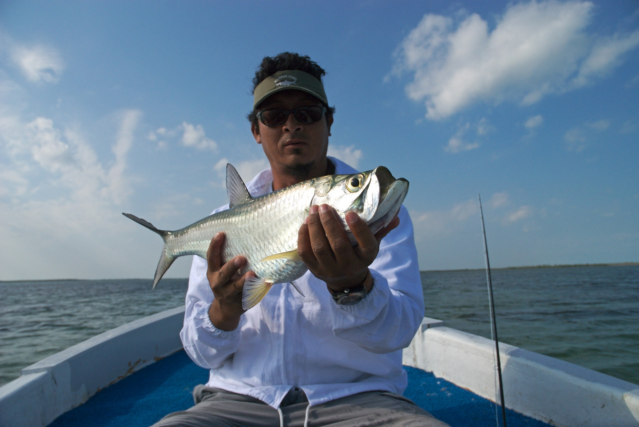 a fly fisherman holds a Tarpon caught by fly fishing Isla Holbox Mexico