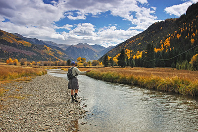 A fly fisherman casting for trout in the fall on the Valley floor outside of Telluride Colorado