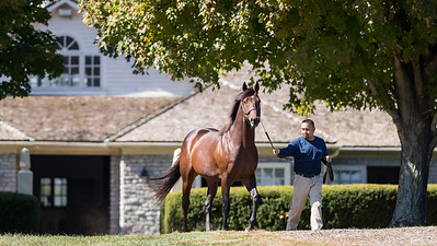 Palace Malice at Three Chimneys 10.10.16