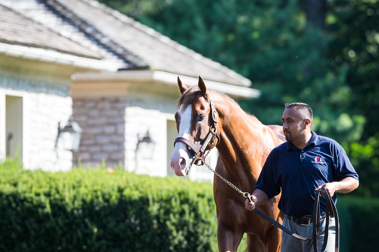 Will Take Charge at Three Chimneys 7.21.16.