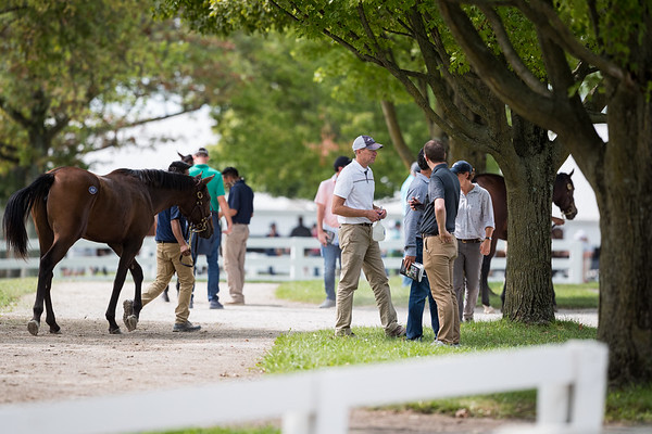 Keeneland sales grounds at the September Sale 9/16/20.
