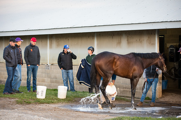Rodolphe Brisset speaking with the Winstar team as they watch Quip geting his bath.