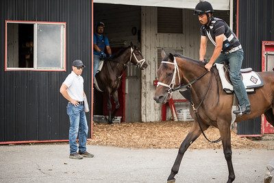 Tom Drury inspects horses as they go out for morning exercise at Skylight Training Center 7.16.20