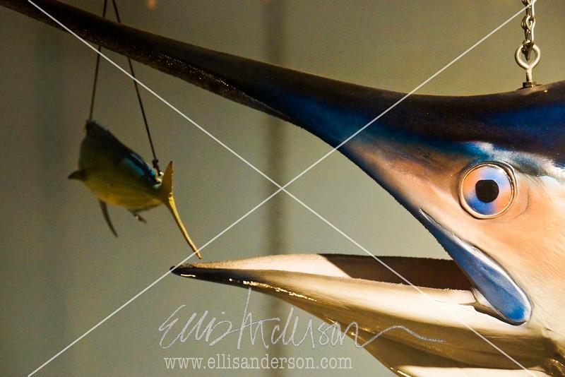 Trapani's Swordfish 0401