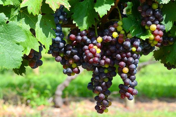 Fiore Winery
