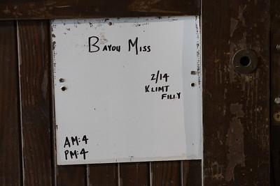 Klimt - Bayou Miss '20 at Sheltowee Farm 2.21.20