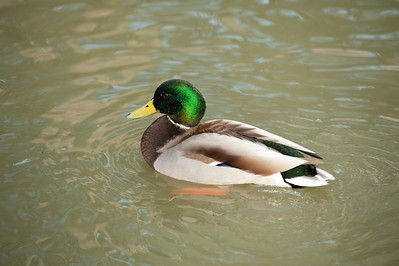 Sylvan Waterfowl Park_048