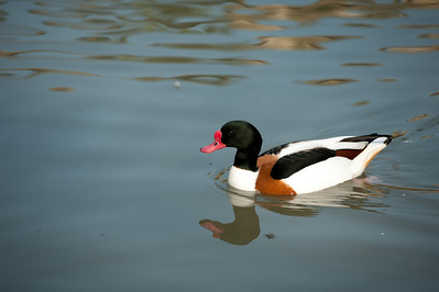 Sylvan Waterfowl Park_053