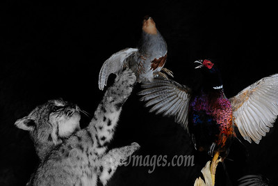 Lake Zurich Photographer. Keiths Master Taxidermist