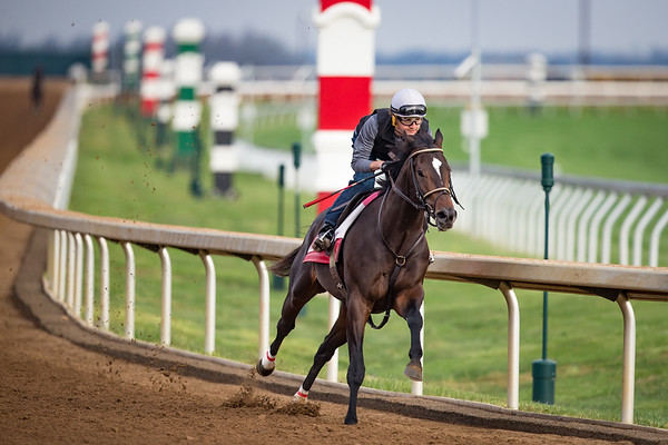 McCraken works at Keeneland on 4/2 in preparation for the Bluegrass Stakes. Brian Hernandez up. Ian Wilkes trainer. Witham Thoroughbreds owner.