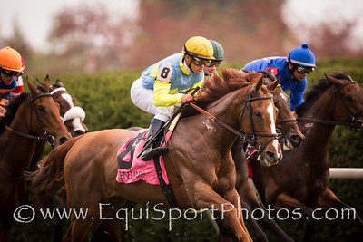 Dayatthespa (City Zip) wins the Queen Elizabeth II Challenge Cup Stakes (G1) at Keeneland on 10.13.12.  Javier Castellano up, Chad Brown trainer, Frankel, Jerry, Freankel, Ronald, Laymon, Steve and Bradley Thoroughbreds owners.