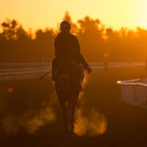 Sunrise scene on the main track at Santa Anita 10.31.13.