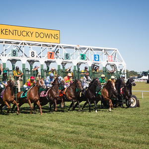 The start of a 6 furlong race on the backside of the track at Kentucky Downs.