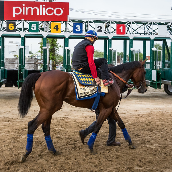 American Pharoah gallops at Pimlico 5.15.15.
