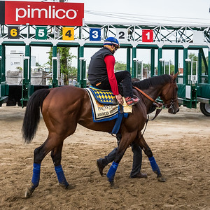 American Pharoah gallops at Pimlico 5.15.15.