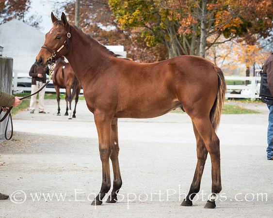 Hip #619, Drosselmeyer - Cuyahoga '13