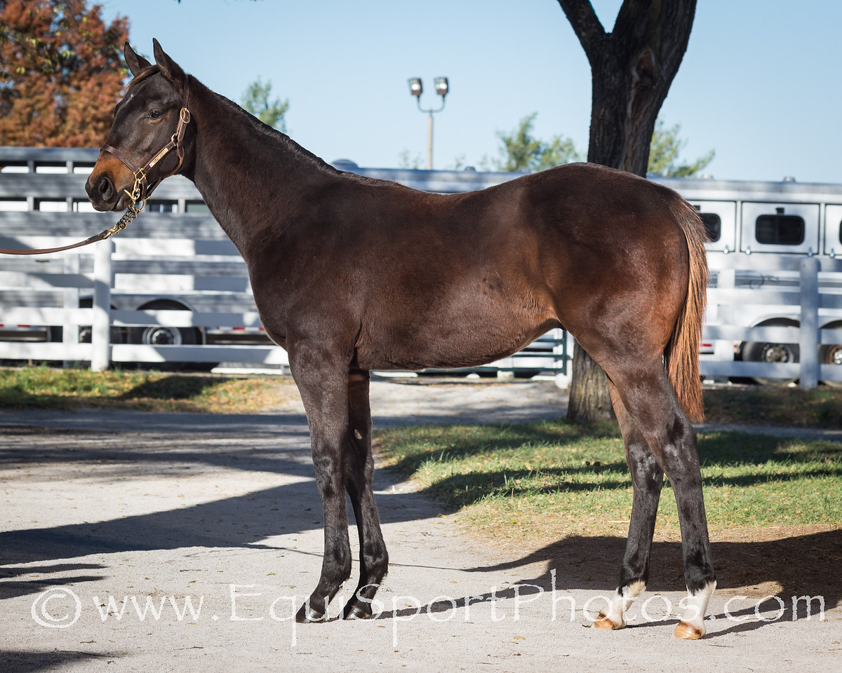 Hip #1872 Sidney's Candy - Double Sixes '13