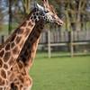 Woburn Safari, 13th April 2014