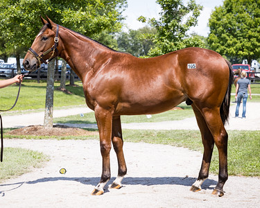 Hip #105 Practical Joke - Beat the Blues '20 at FT for Wynnstay, 7.10.21