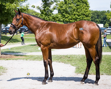 Hip #94 Bolt d'Oro - Wall of Worry '20 at FT for Wynnstay, 7.10.21