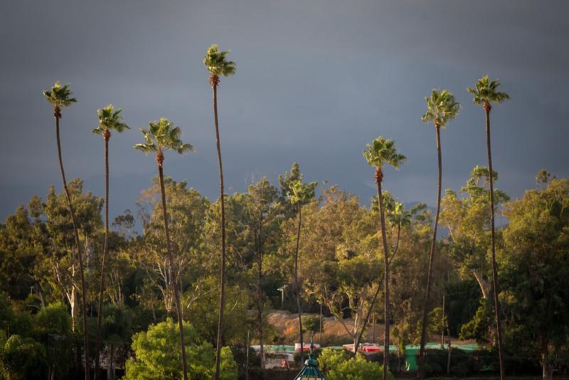 Xpressbet presence and Santa Anita scenic 11.01.14.