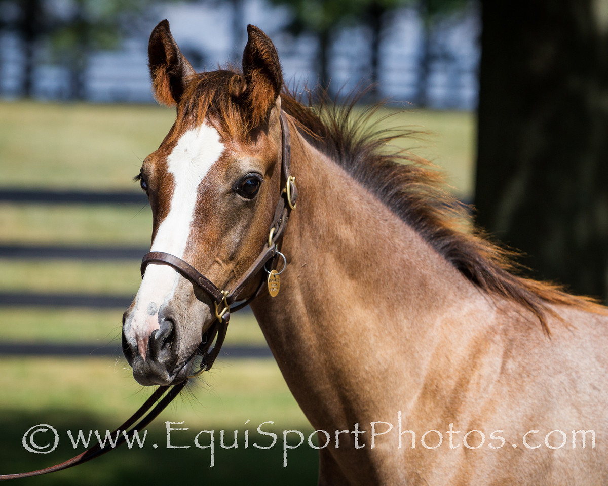 Enchanted Woods Foal '12 at Vinery 7.17.2012