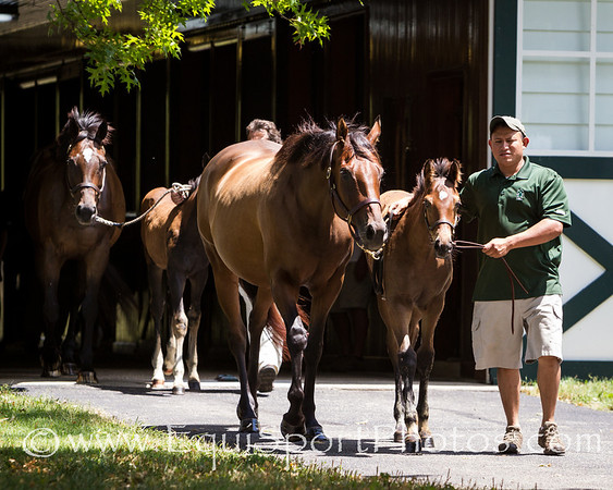 Zayat horses turnout at Vinery 7.17.2012