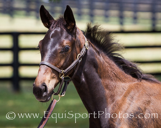 Tamar Foal '12 at Vinery 7.17.2012
