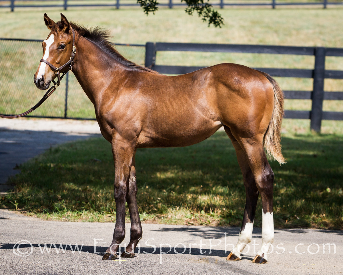 Everlasting Beauty Foal '12 at Vinery 7.17.2012
