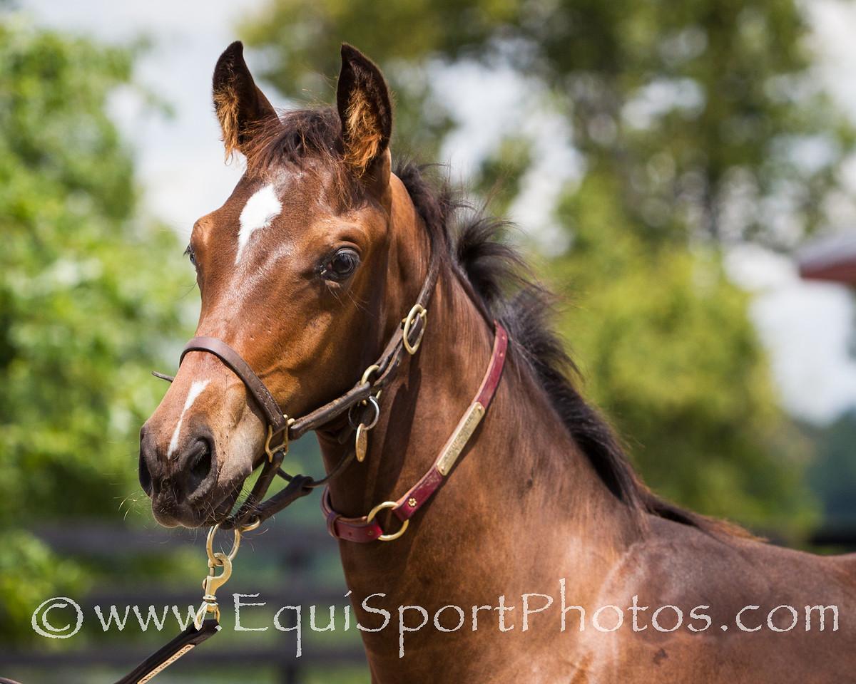 Beautiful Julie Foal '12, 7.16.2012