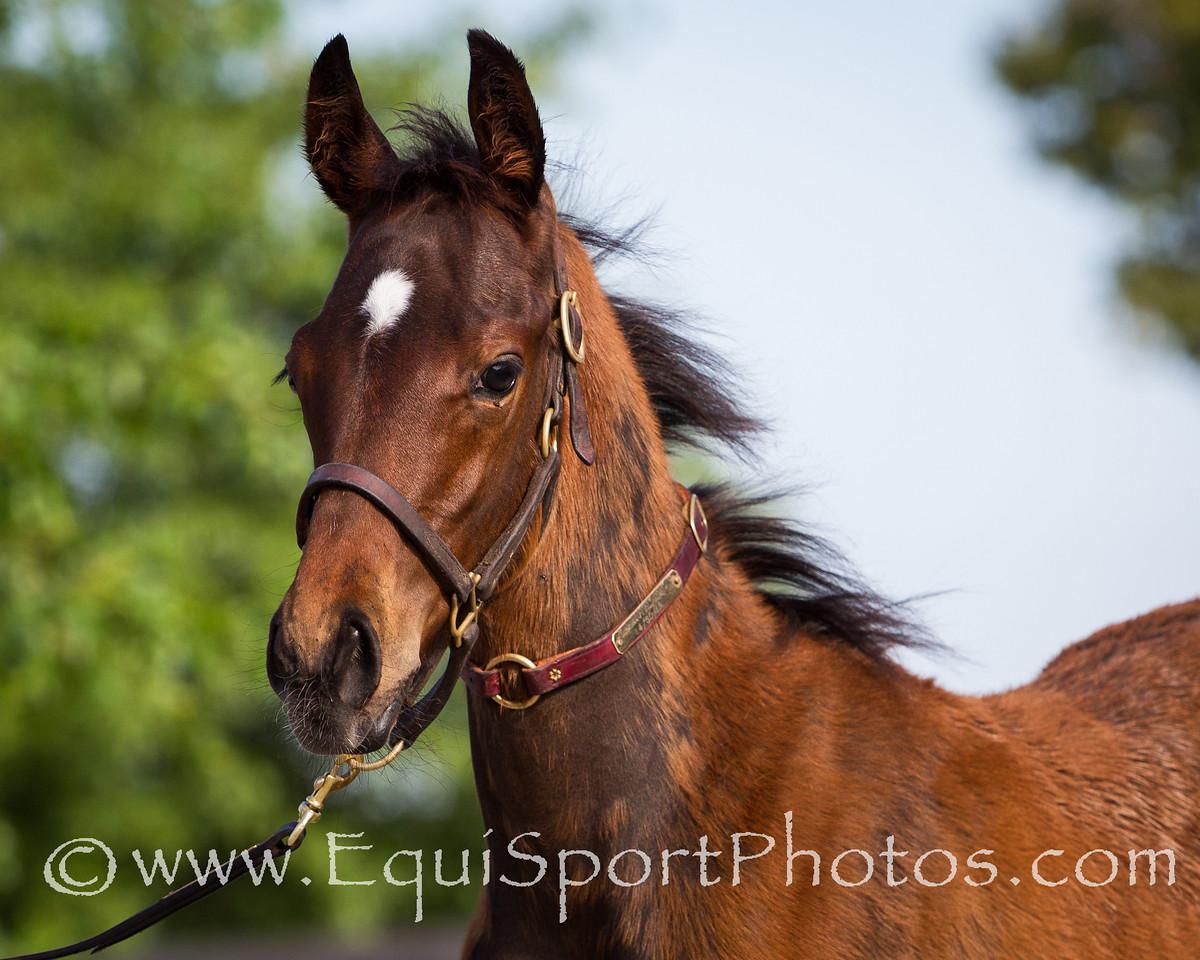 Undercover Angel Foal '12, 7.16.2012
