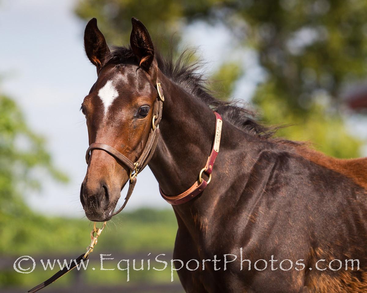 Souma Foal '12, 7.16.2012
