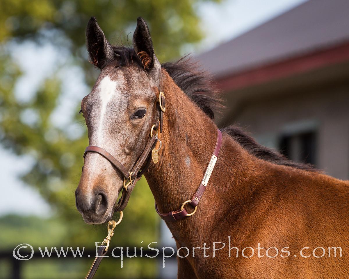 Joanne Jubilation Foal '12, 7.16.2012